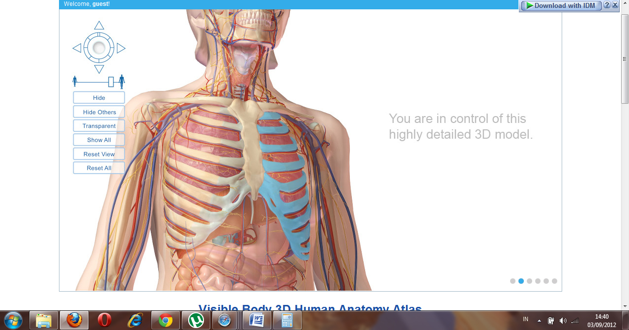 Www human body anatomy