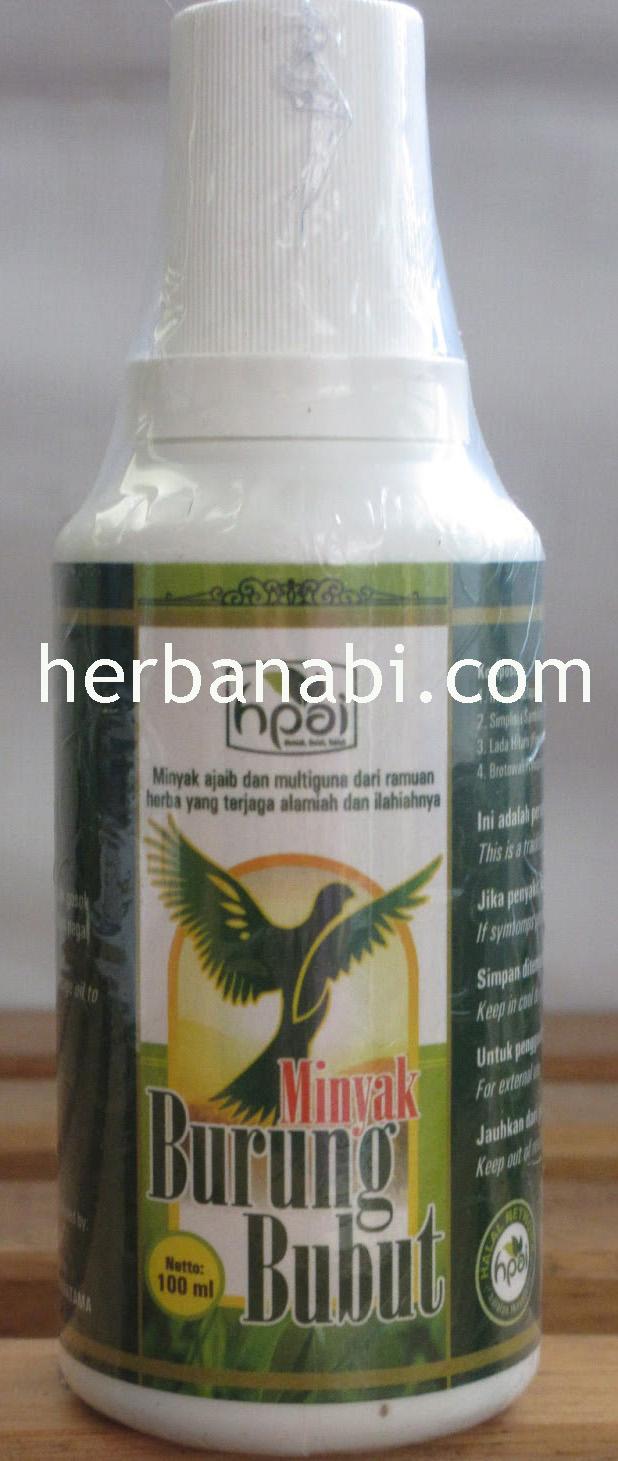 minyak burung butbut