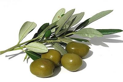 grosir buah zaitun di surabaya sidoarjo