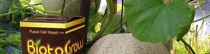grosir biotogrow gold murah sumenep