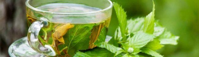 jual teh hijau organik terbaik