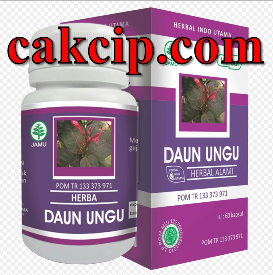 Jual daun ungu herbal indo utama
