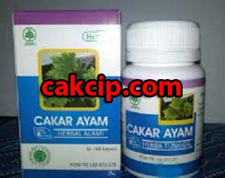 agen herbal cakar ayam murah herbal indo utama.jpg