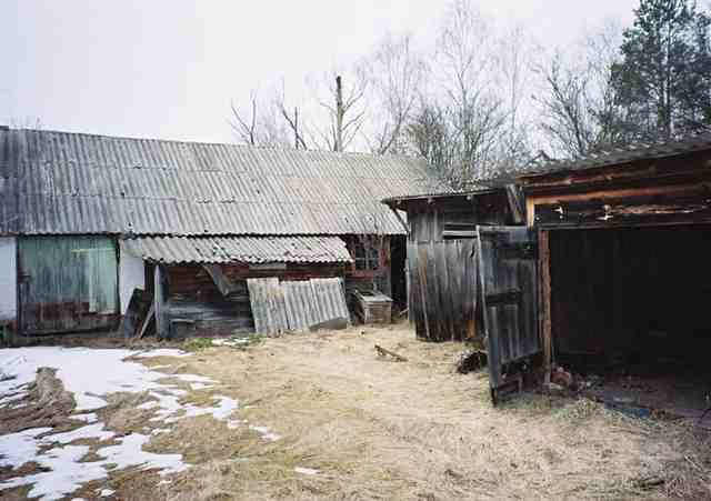 kondisi hewan binantang di chernobyl