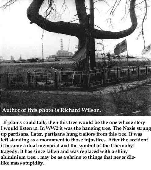 pohon cerita bencana chernobyl