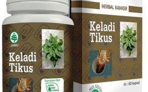 keladi tikus herbal indo utama